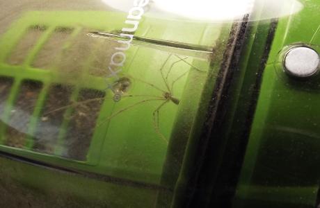 Kreischalarm – Spinne im Staubsauger