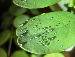 Hyaluron spritzen: Hyaluron verhilft zu mehr Feuchtigkeit