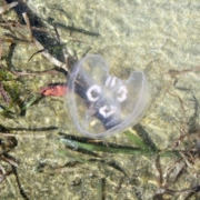Jeder kann Plastik im Meer vermeiden